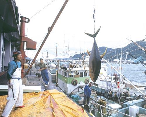 宮崎県漁連【漁業のご紹介】